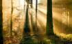 Zonsopkomst in bos vol verhalen
